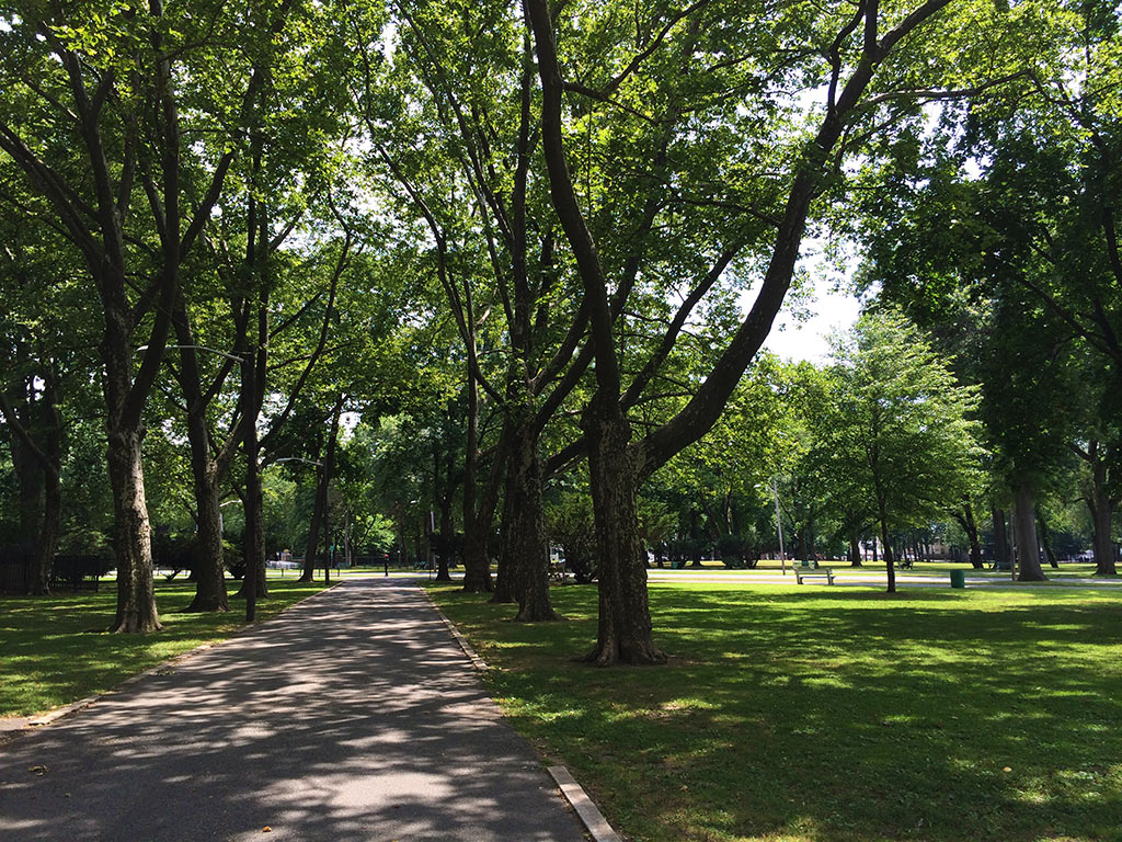 Tree lined paths for photography in Lincoln Park